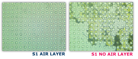 air layer diatoms presence