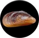 biofouling species-2