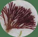 biofouling species